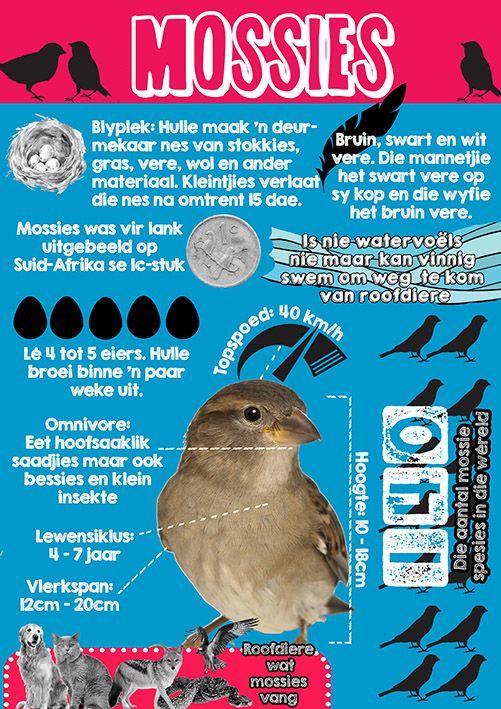 Afrikaanse taakhulp: Mossies Infografika. Voëls. Feite. Als oor mossies. Animals. Diere. Birds. Hoezit.