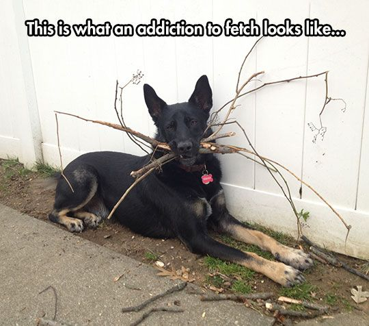 Fetch. Not Even Once