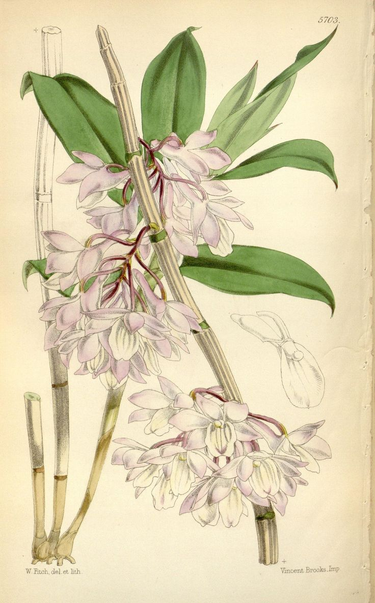 Best 25 botanical drawings ideas on pinterest botanical for Botanical tattoo london