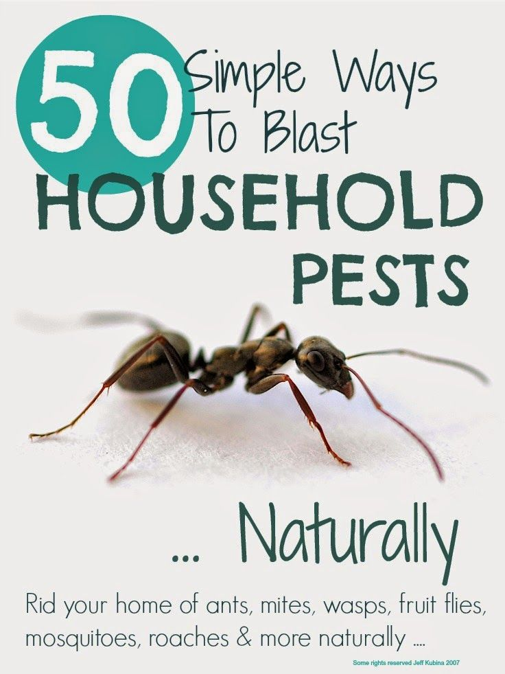 A comprehensive list of tips that will help you get rid of household pests naturally ... including bugs, ants, mice, fleas, moths, fruit flies and wasps ...