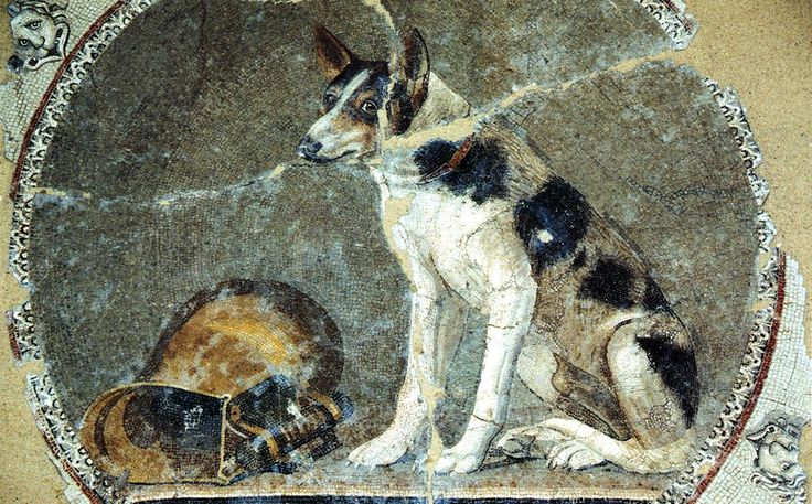 Crazy beautiful high quality opus vermiculatum mosaic from the library at Alexandria, thus Greek, not Roman. Also, this dog is an ancestor of Sparky.