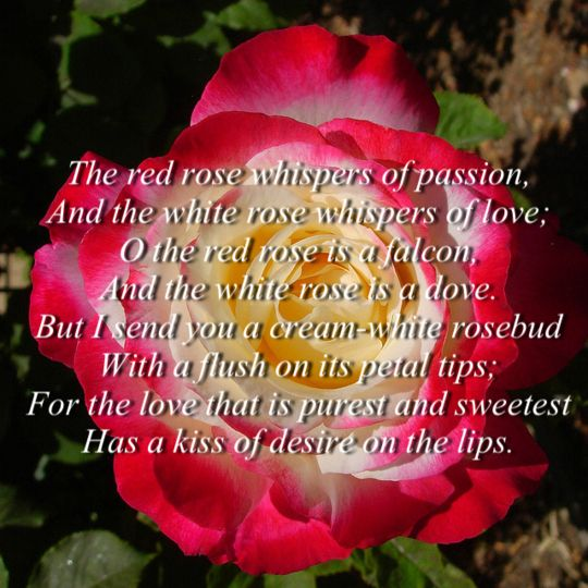 black love poems for wife | Love Poetry In Urdu Romantic 2 Lines For Wife by Allama Iqbal SMS Pics ...