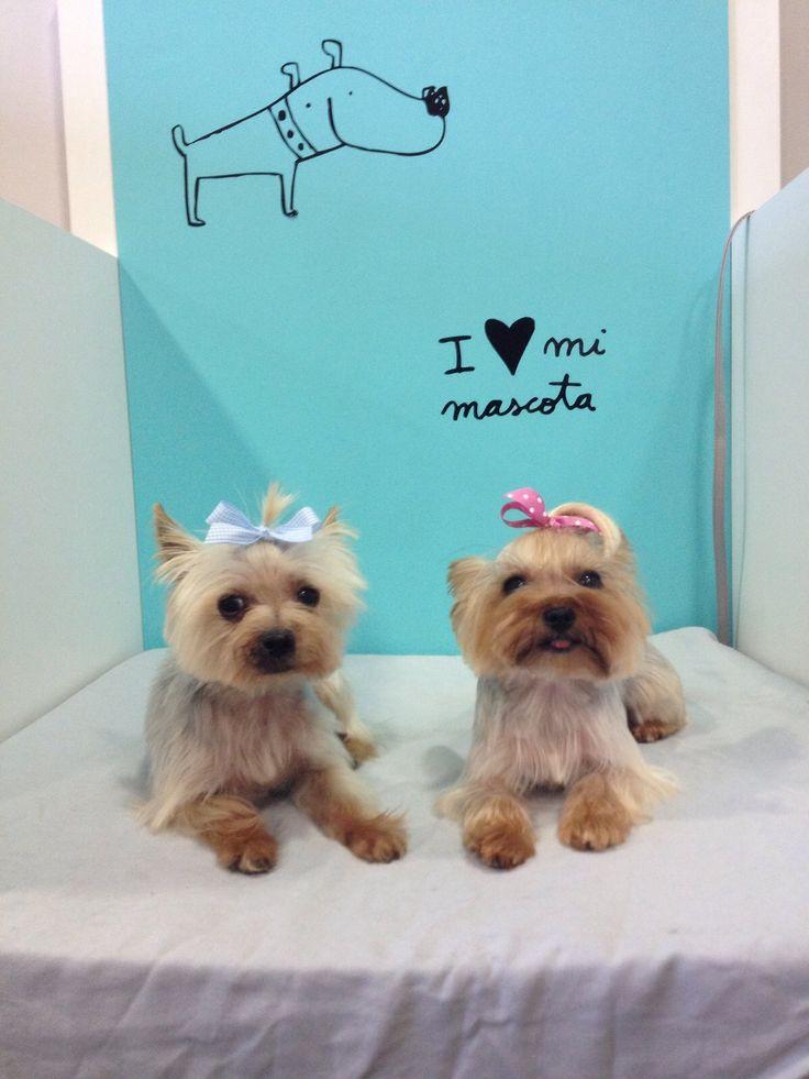 ¡Hasta de dos en dos vienen a la #peluqueria! Ela y Trevi después de un buen corte de pelo :)