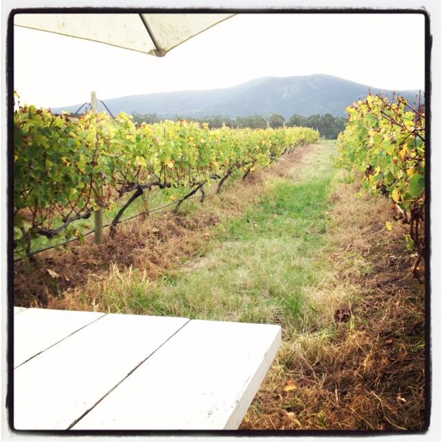Bramon wine estate, Plettenberg Bay