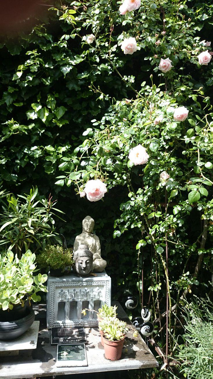 Prachtige rozen in de tuin van    VIA CANNELLA WOONWINKEL   CUIJK