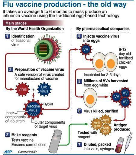 flu vaccine production