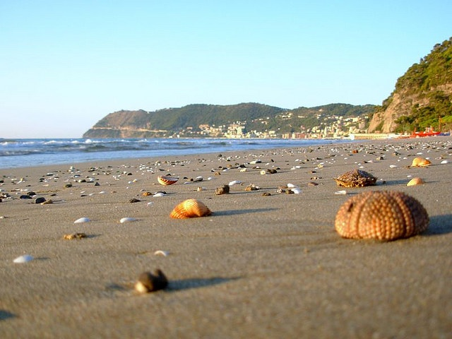 A spectacular view: the beach in #Alassio - #Liguria looks like a dream. Even if the sea urchin looks like a pumpkin!