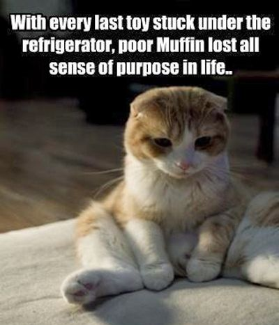 How cute is he!Poor Muffins, Couch, Dogs, Funny Cat, Funny Pictures, Funny Photos, Funny Animal, Kitty, Cat Toys