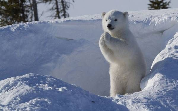 俺が少しずつ集めてきた動物の可愛い画像を放出したい:ハムスター速報