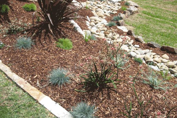 Australian Native Landscape Design, Lower North Shore Sydney. Sandstone Edge, Dry River Bed, Kangaroo Paw, Blue Fescue Grass, Weeping Acacias, Red Flaxes  Original Source: www.peacefullandscapes.com.au