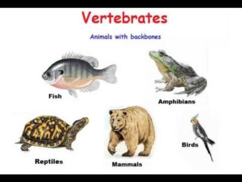 Classical Conversations Science: Vertebrates Week 6