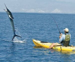 Marlin fishing on a kayak