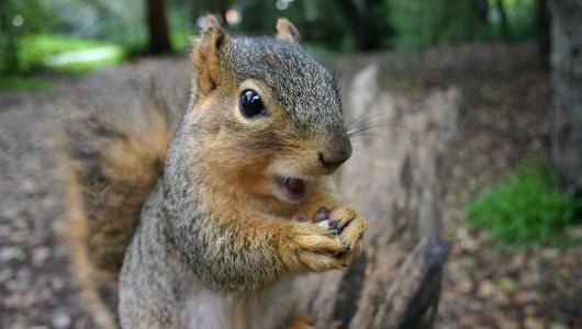 Happy Squirrel Appreciation Day  In honor of Squirrel Appreciation Day on Jan. 21, here are 21 noteworthy facts about these ubiquitous and opportunistic rodents.
