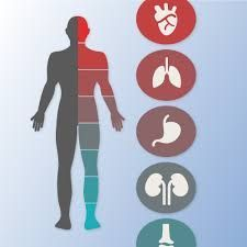 Dr. Mithilesh Tyagi is the best internal medicine specialists at Kalra Hospital Delhi qualified to diagnosis, treat and prevent all medical conditions for patients.