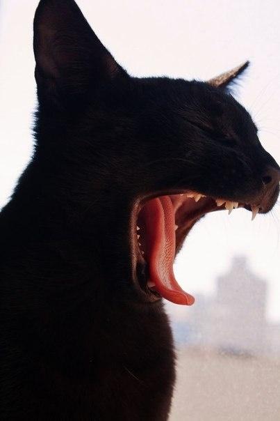 Schwarze Pussy in Kapstadt