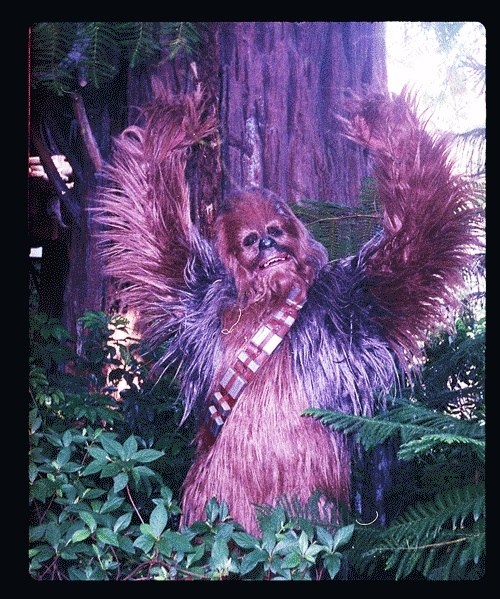 Raise your hands if you want to join this Wookie and go to Star Wars Weekends May 9 to June 9, 2013 at Disney's Hollywood Studios.  Click here to learn more: http://di.sn/t68