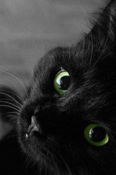 black kitty cat with green eyes