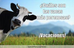 Cuales son las vacas mas perezosas? VACAciones.  Chiste at SpanishPlans.org/chistes