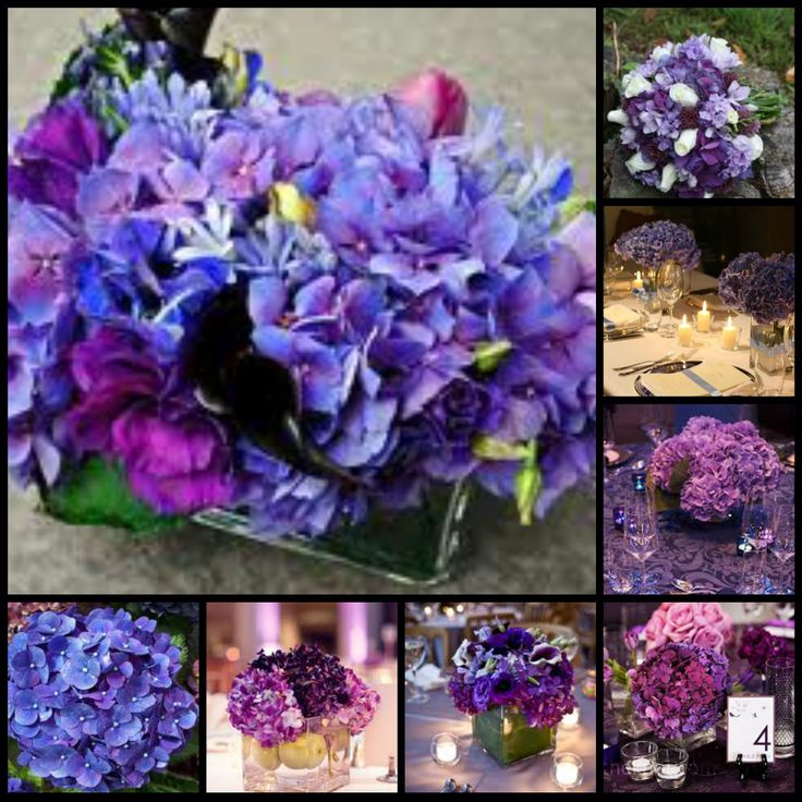 Types Of Purple Flowers Names