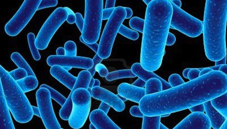 Bakterier forstørret op så de kan ses.