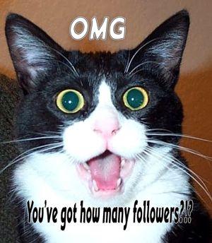 Shocked cat - Twitter followers