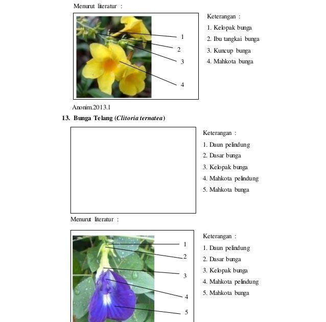 Paling Hits 30 Gambar Bunga Lengkap Dan Keterangannya Laporan Praktikum 6 Bunga Majemuk Morfologi Tumbuhan Download Berilah Ke Di 2020 Gambar Bunga Kembang Sepatu