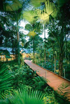 Australian rainforest at Silky Oaks Lodge, located next to the World Heritage listed Daintree Rainforest National Park, Australia