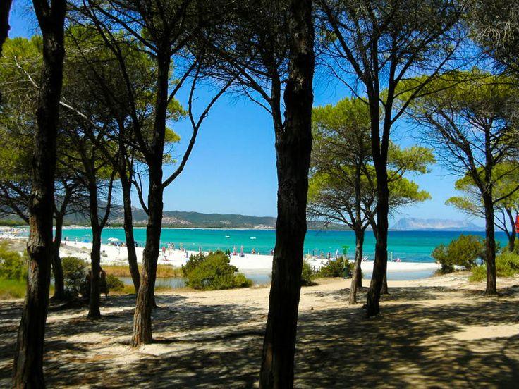 Sardegna Budoni - Spiaggia di Sant'Anna vista attraverso l'omonima pineta in località Tanaunella.  #sardegna #spiagge #budoni #immobiliare