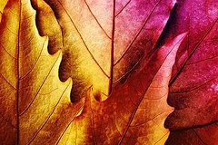 Joel Vieira - Leaves of vibrant colors