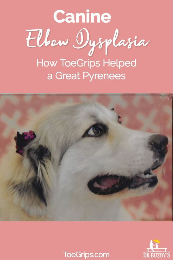 Toegrips Help Great Pyrenees With Elbow Dysplasia Dog Grooming