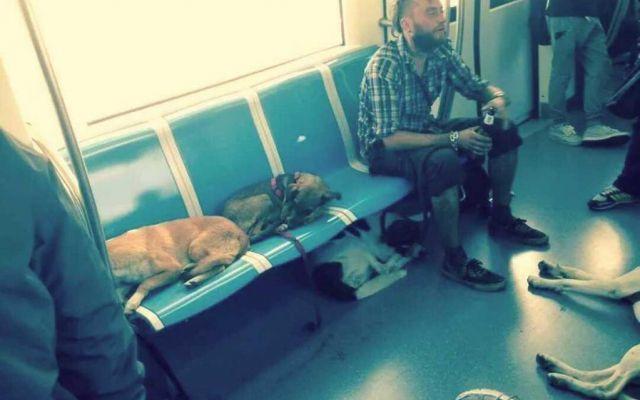 Viaggiando col cane sulla #RomaLido #roma-lido #pendolari #ostia #cani