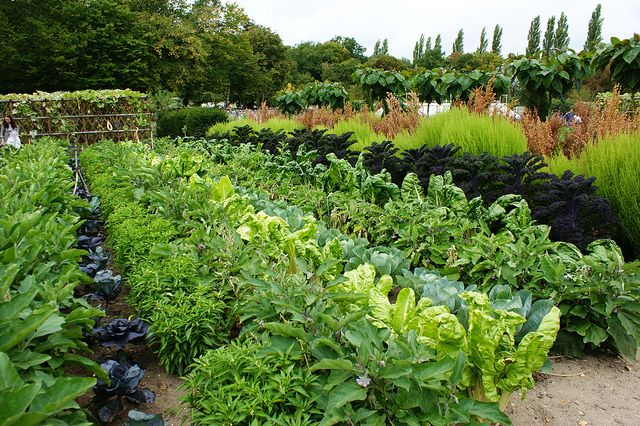 1000 images about vegetable gardens french potager on for Jardin potager 78