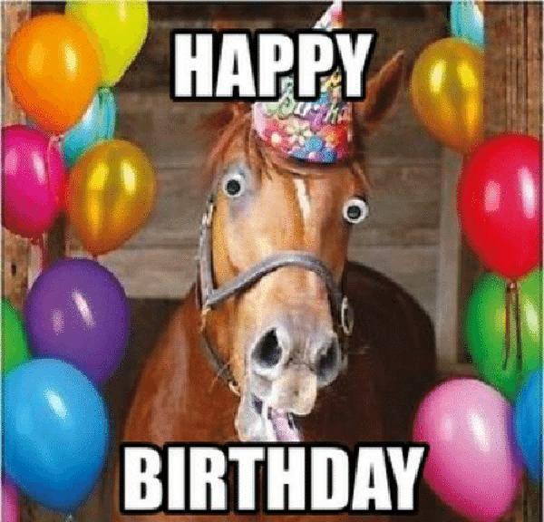Funny Horse Happy Birthday Meme Happy Birthday Horse Happy Birthday Fun Happy Birthday Wishes For Her