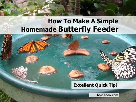 How To Make A Simple Homemade Butterfly Feeder