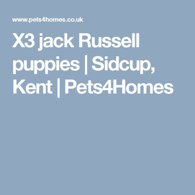 X3 jack Russell puppies | Sidcup, Kent | Pets4Homes