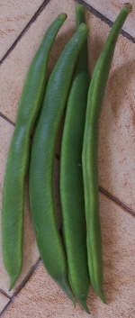 Growing Scarlet Runner beans. Attracts Hummingbirds!! good info. On planting