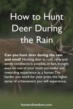The right way to Hunt Deer Throughout the Rain
