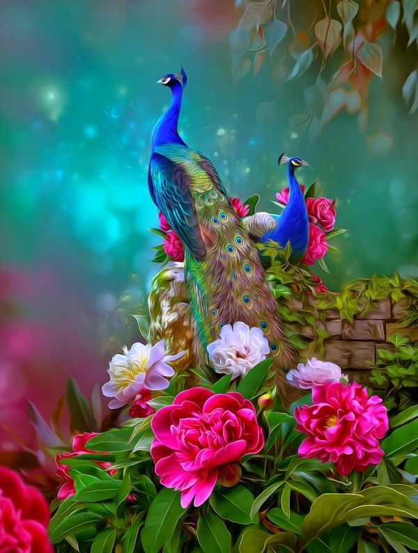 Pin By Paredezever On Animals Allatok Good Morning Beautiful Flowers Peacock Pictures Good Morning Beautiful Pictures