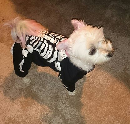 skeleton dog costume - spooky