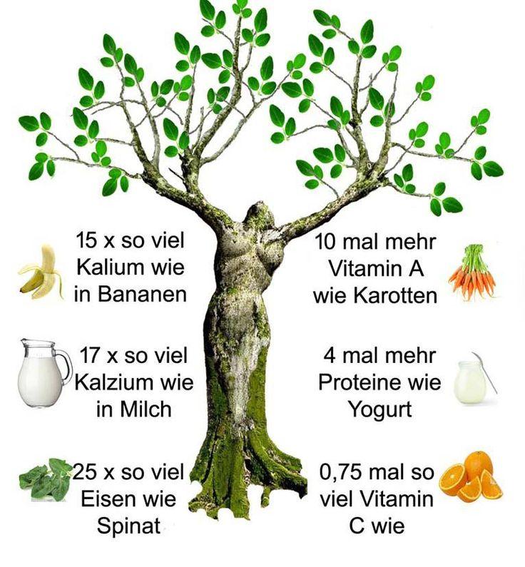 Magische Pflanze Moringa – Das Kraut das Krebs zerstört und Diabetes stoppt | Alpenschau.com