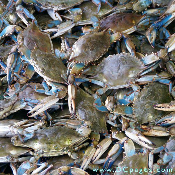 34 best shrimp boats images on pinterest shrimp fishing for Blue crab fishing