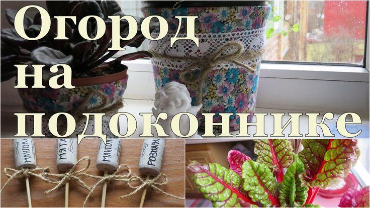 ✽ Мой огород на подоконнике ✽ My herbs garden on the windowsill