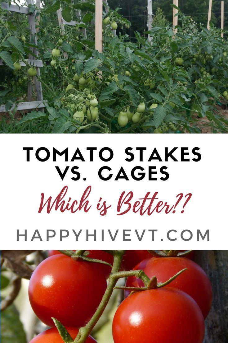 Single Post Tomato Garden Growing Tomatoes Food Garden