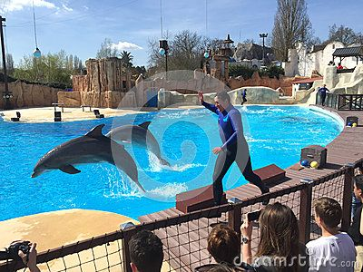 Dolphins performance in Park Asterix in Paris