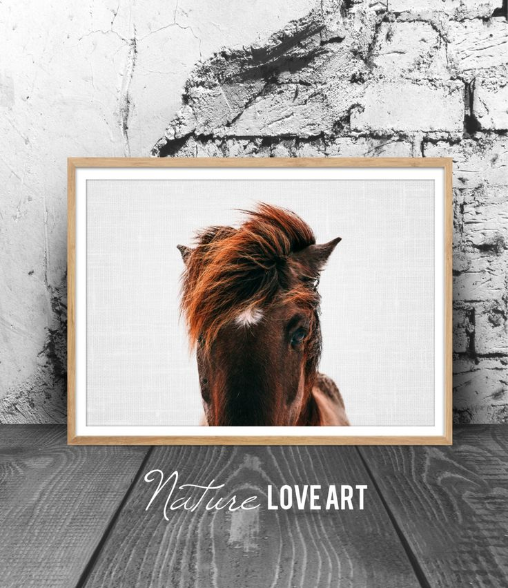 Photographie de cheval, photo couleur, cheval islandais, décoration moderne, décoration animal, déco murale moderne, poster cheval de la boutique NatureLoveArt sur Etsy