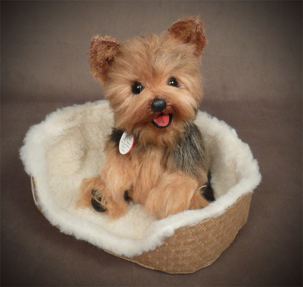 so mama finally found the heart to consider owning a yorkie. just a matter of time till I get one :)
