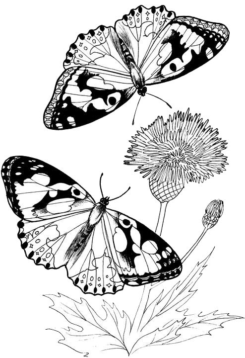 Hello Kitty Butterfly Coloring Pages : Best a single flowers to paint images on pinterest