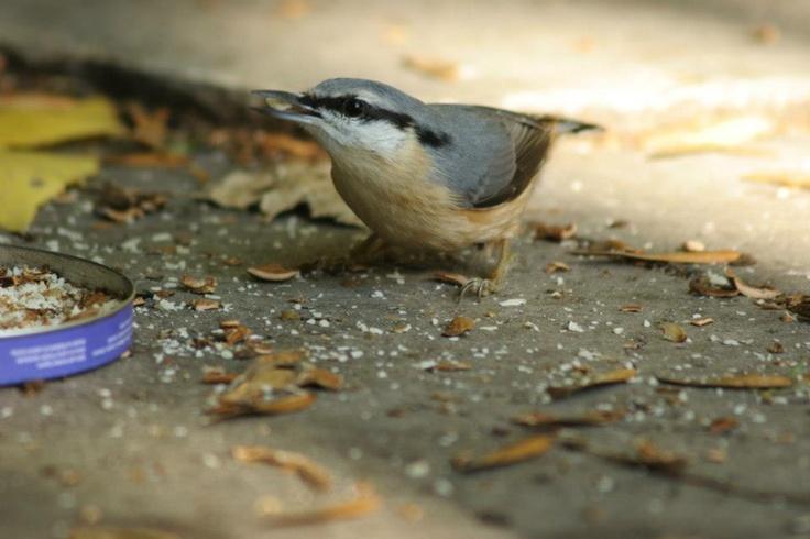 Gyönyörű a madár:-)