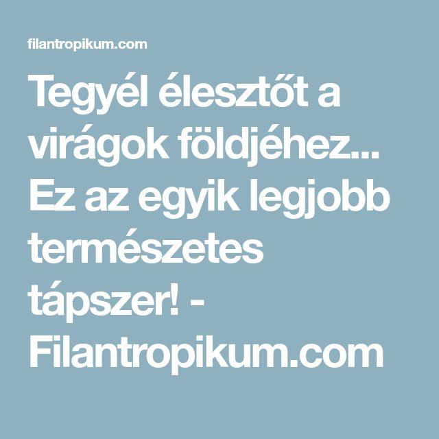 Tegyél élesztőt a virágok földjéhez... Ez az egyik legjobb természetes tápszer! - Filantropikum.com