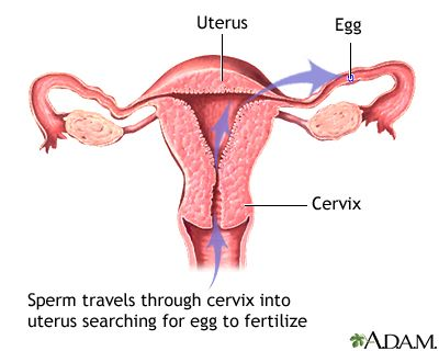 Pregnancy occurs only if sperm enters the cervix, travels to the uterus, &meets a fertile egg. Stopping the sperm's journey stops pregnancy. Turning off ovulation with hormonal birth control, or implanting a foreign substance like a coil/IUD are drastic measures we accept as the only birth control options. But it's not true! Everything you could want  here: http://ethicalfamilyplanning.com/natural-contraception/barrier-contraception.html. No need to fax a prescription. International…